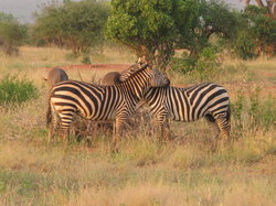 Bruno Safaris - Day Tours