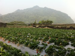 Chun Hsiang Strawberry Farm