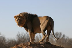 African Eagle Day Tours