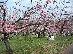 札幌市平岡梅園 (30709525)
