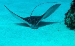 DNS Diving