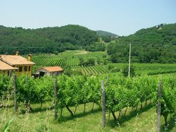 Veneto Italy and Wine
