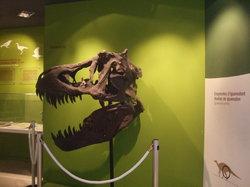 Museo Paleontologico de Elche