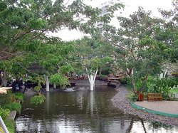 Manglares Churute Mangrove Tours