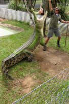 Johnstone River Crocodile & Animal Park