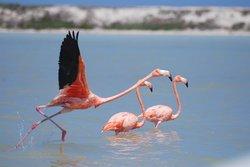 flamenco en vuelo