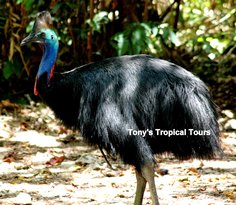 ‪Tony's Tropical Tours‬