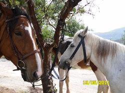 Finikia Horseriding