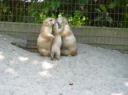 Salisbury Zoo