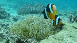 Misaki Diving
