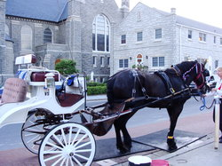 Cape May Carriage