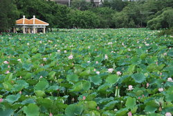Honghu Park
