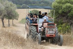 Karpaz Tractor Safari