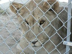Aloha Safari Zoo