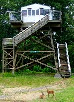 Forest Fire Lookout Tower for visitors to climb!