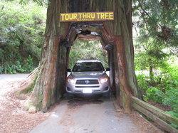 Tour-Through Tree