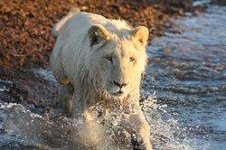 Ukutula Lion Park
