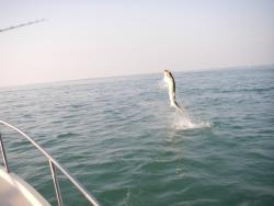 Catch 'Em All Sportfishing Charters