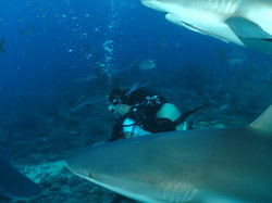 Roatan Shark Dive