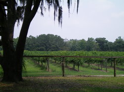 Deep Water Vineyard