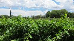 Granite Creek Vineyards