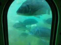Genkai Underwater Observation Tower