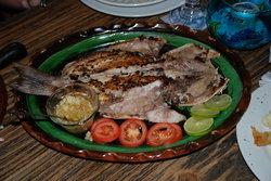 Langosteria Maya Restaurant