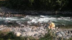 The Gurgling Stream