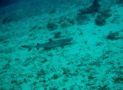 Q-Dive Bali