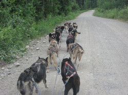 Dream a Dream Premier Iditarod Kennel
