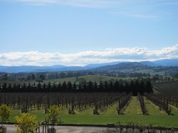 Yarra Valley Private Winery Tours