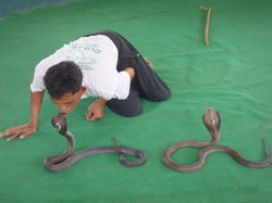 Mae Sa Snake Farm