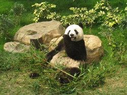 Paviliun Panda Raksasa Makao