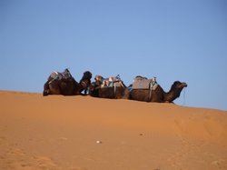 Morocco Sahara 4x4 - Day Tours