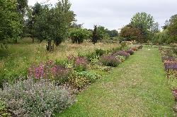 The stunning garden