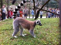 Veszprem Zoo (Kittenberger Kálmán Növény és Vadaspark)