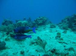 帕兰卡珊瑚礁