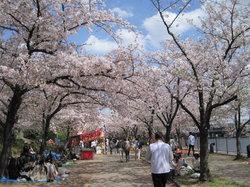 毛馬桜之宮公園