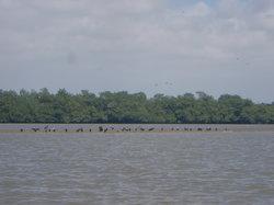 Los Manglares de Puerto Pizarro