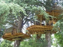 tree houses on site