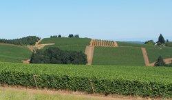 Erath Vineyards Winery