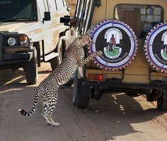 Roy Safaris Ltd. - Day Tours