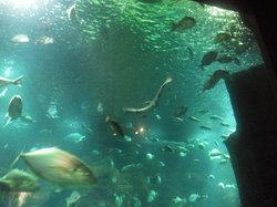Aquario da Madeira
