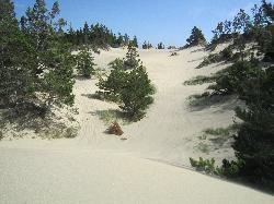 Dune Bugs ATV Tours