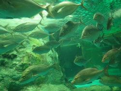 海洋世界63号水族馆