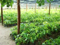 Hacienda Cacaotera Jesus Maria