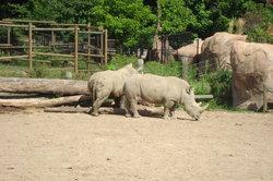 Peoria Zoo