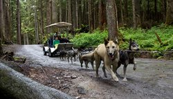 Dog Sled Discovery & Musher's Camp