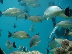 海中展望塔から見えた魚たち