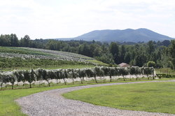 Round Peak Vineyard